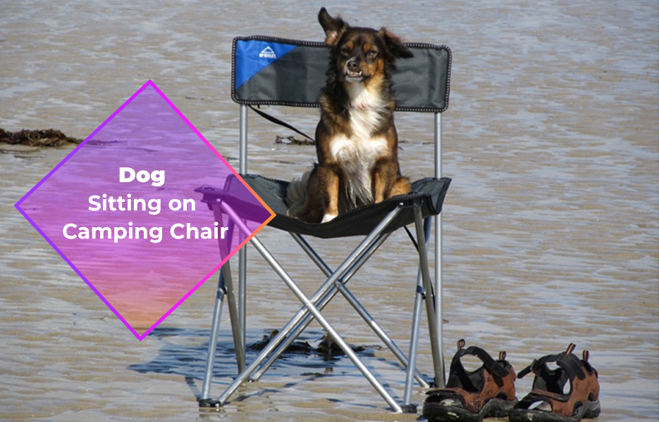 Dog sitting on camping chair