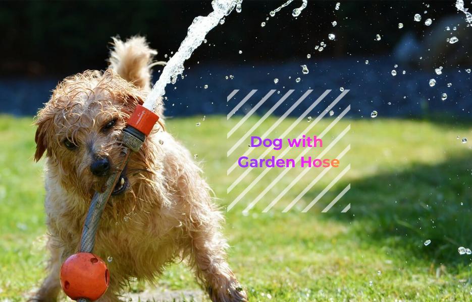 Dog with garden hose