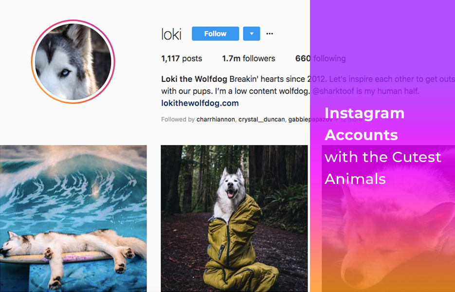 Instagram accounts with the cutest animals