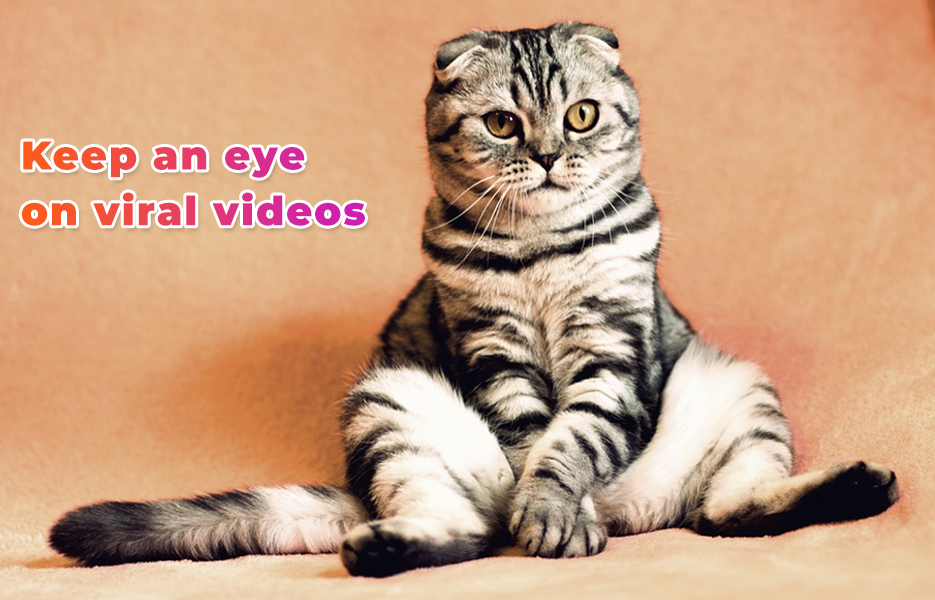 funny cats on YouTube