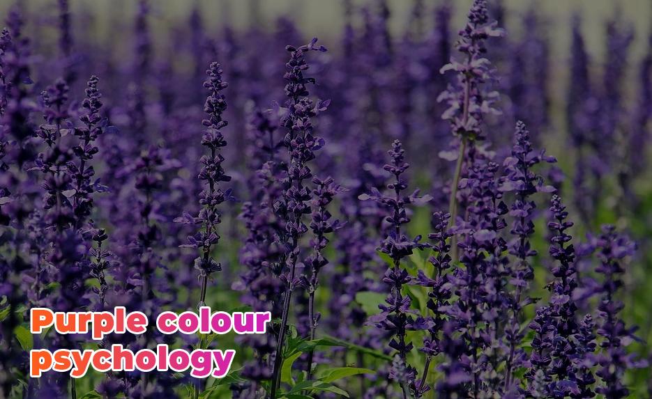 Purple colour psychology
